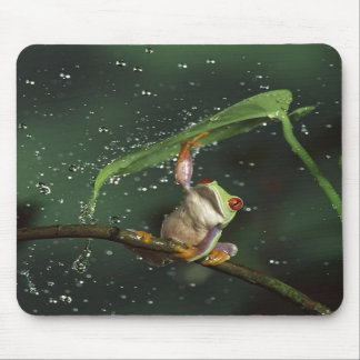Mousepad,  Red Eyed Tree Frog