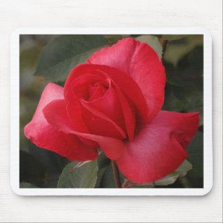 Mousepad talk rose