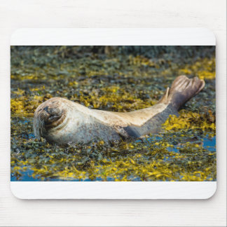 Mousepad with a seal at the scottish coast
