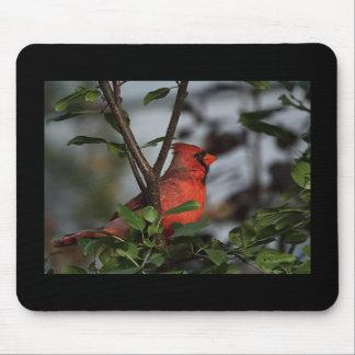 Mousepad with Cardinal!