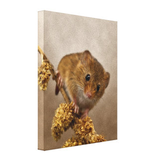 Mousie Wrapped Canvas Print