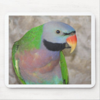 Moustached Parakeet Mouse Mat