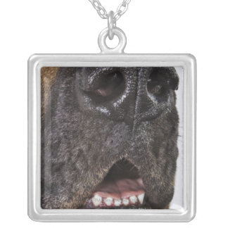 Mouth of Great Dane, close-up Silver Plated Necklace