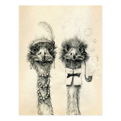 Mr. and Mrs. Ostrich Post Card