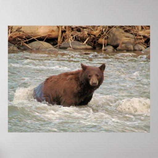 Mr. Bear Poster
