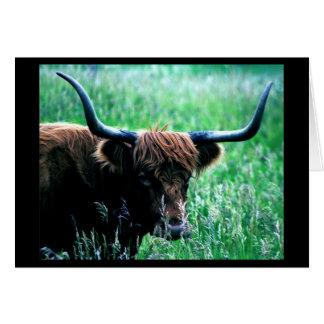 Mr. Bull Note Card