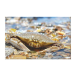 Mr. Crab Canvas Prints