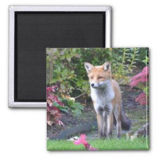 Mr Fox Fridge Magnet