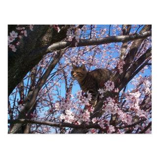 Mr Hopper welcomes Spring Postcard