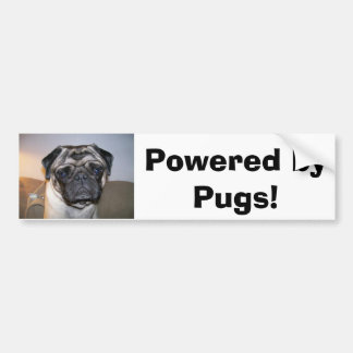 mr nibbles, Powered by Pugs! Bumper Sticker