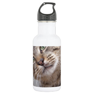 Mr Personality the Tabby Cat 532 Ml Water Bottle