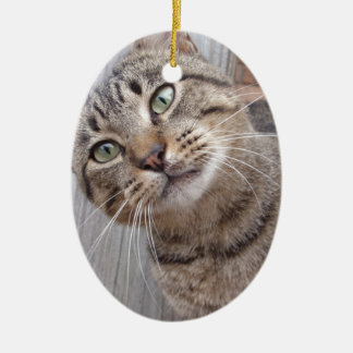 Mr Personality the Tabby Cat Ceramic Oval Decoration