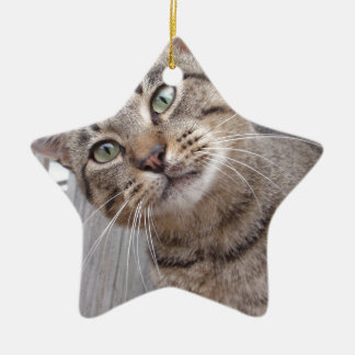 Mr Personality the Tabby Cat Ceramic Star Decoration