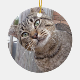 Mr Personality the Tabby Cat Round Ceramic Decoration