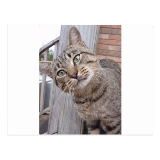 Mr Personality the Tabby Cat Postcard