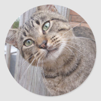 Mr Personality the Tabby Cat Round Sticker