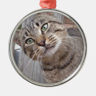 Mr Personality the Tabby Cat Silver-Colored Round Decoration