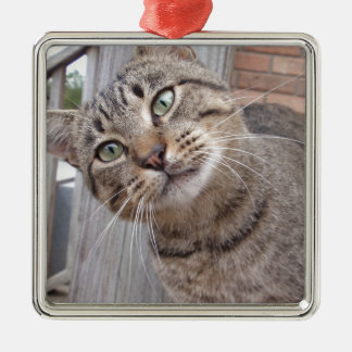 Mr Personality the Tabby Cat Silver-Colored Square Decoration
