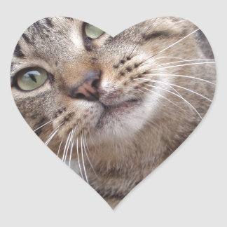 Mr Personality the Tabby Cat Heart Sticker