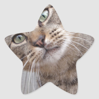 Mr Personality the Tabby Cat Star Sticker