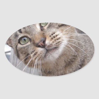 Mr Personality the Tabby Cat Oval Sticker