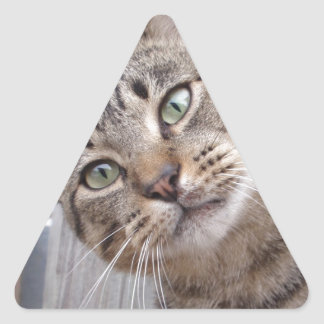 Mr Personality the Tabby Cat Triangle Sticker