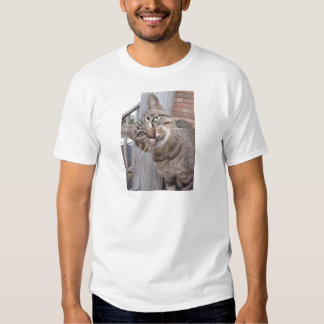 Mr Personality the Tabby Cat Tshirt