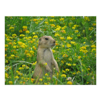 Mr Prarie Dog Posters