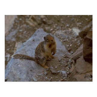 Mr Squirrel Postcard-So Cute