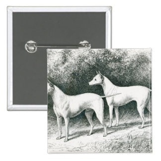 Mr. Vero Shaw's White English Terriers 15 Cm Square Badge