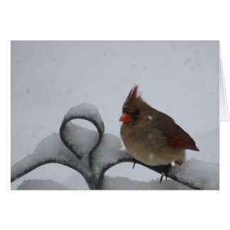 Mrs. Cardinal Notecard - Blank Inside