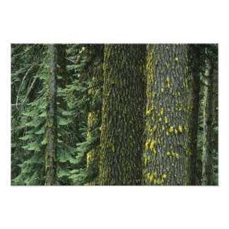 Mt. Ashland, Rogue RIver National Forest, Photo Print