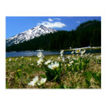 Mt Bachelor & Wildflowers 1 Postcard