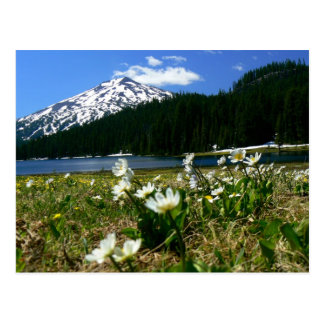 Mt Bachelor & Wildflowers 1 Postcard