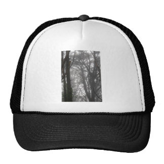 Mt Davidson Trees and Fog Hat