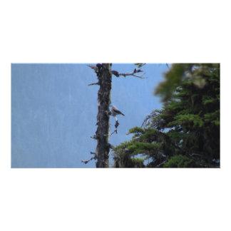 Mt Jefferson Animals Birds Aves Fauna Oregon Photo Card
