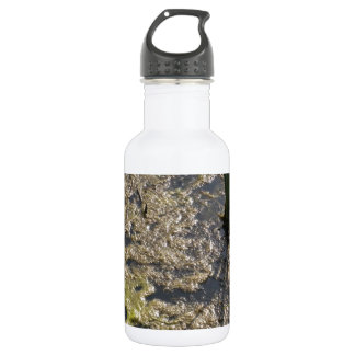 Muck and algae in stagnant water 532 ml water bottle