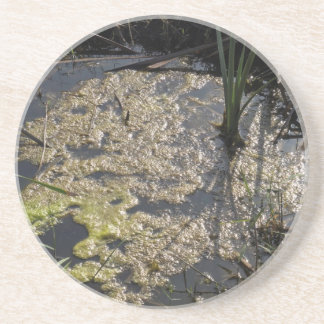 Muck and algae in stagnant water drink coaster
