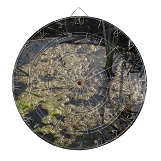 Muck and algae in stagnant water dart board