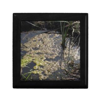 Muck and algae in stagnant water trinket box