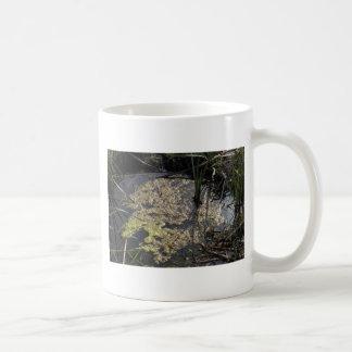 Muck and algae in stagnant water coffee mug