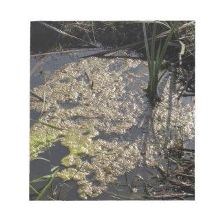 Muck and algae in stagnant water memo pads