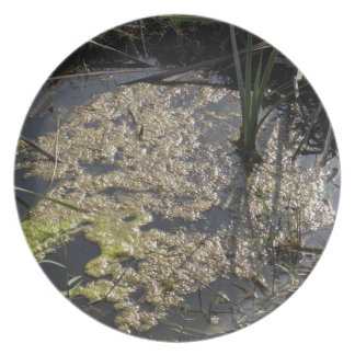 Muck and algae in stagnant water party plate