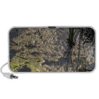 Muck and algae in stagnant water portable speakers