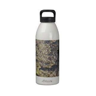 Muck and algae in stagnant water drinking bottle