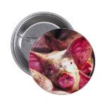Muddy Piglet Buttons