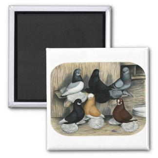 Muffed Tumbler Pigeons Magnets
