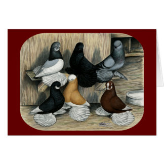 Muffed Tumbler Pigeons Note Card
