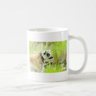Mug -Lemur- Ring Tailed