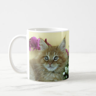 Mug Maine Coon kitten